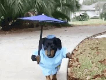비가 오는데 산책을 해야된다면?