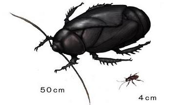 고대 바퀴벌레 크기
