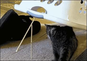 고양이 덫