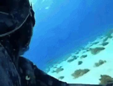 잠수 중에 만난 상어