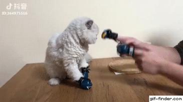 고양이 화풀이