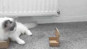 상자는 다 내꺼야