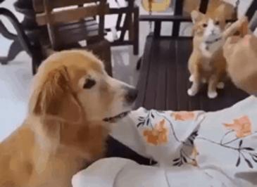 저렇게 하면 먹을거 주는구나