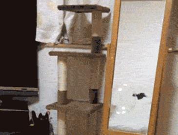 비누거품이 신기한 고양이