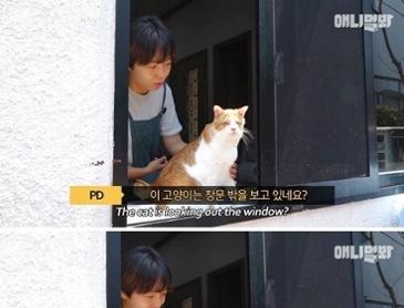 세상에서 가장 특별한 눈을 가진 고양이