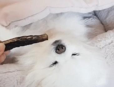 잠든 강아지를 깨우는 방법