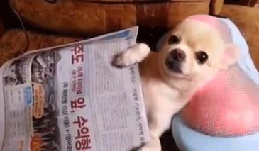 안마 받 개