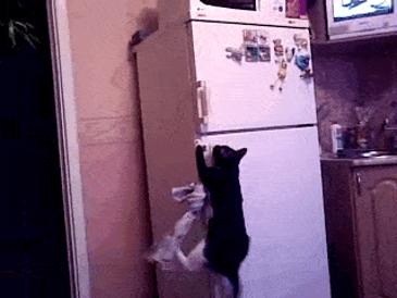 냉장고 이용하기