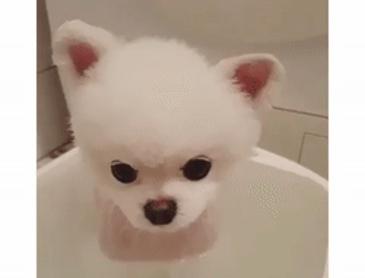 목욕하다 잠드는 강아지