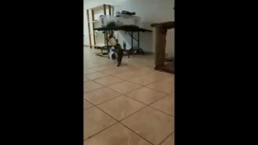 사료를 본 고양이의 발걸음