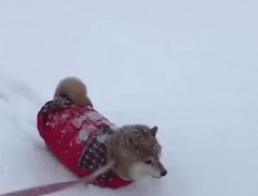 산책하는 강아지