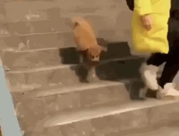 계단 마스터