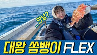 제주도 대왕 쏨뱅이 FLEX! King's scorpion Fish FLEX in Jeju Island!