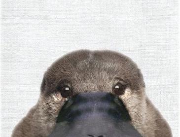 오리너구리 여권사진