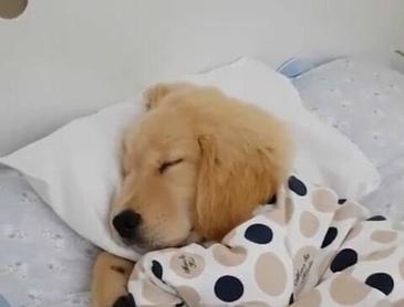 꿀잠자는 댕댕이