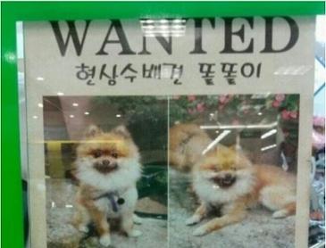 강아지를 찾습니다