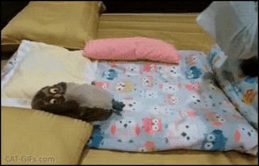 얌전한 고양이