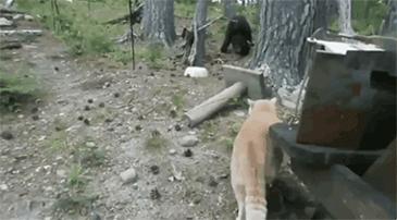 곰 대 냥