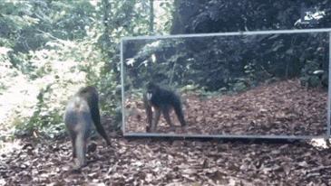 거울을 본 동물들의 반응