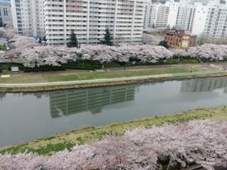 벚꽃이 만개한 토요일입니다.