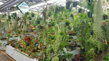 양재 꽃시장
