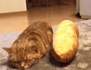 냐옹이와 빵