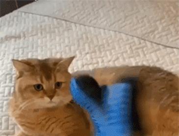 모자 쓴 고양이