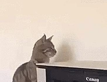 프린터가 고양이에게 미치는 영향
