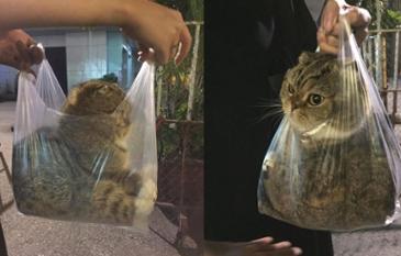 고양이도 만족하는 최고의 이동케이스