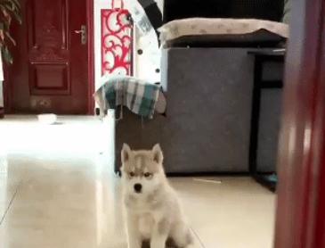 귀여운 아기 강아지