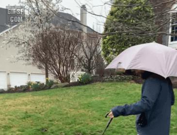 목줄 우산