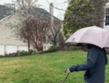 댕댕이 전용 우산