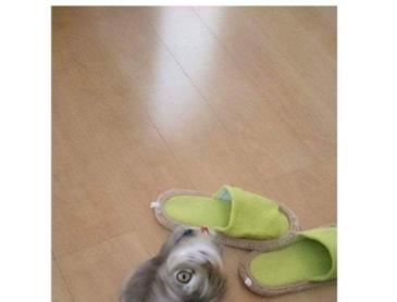 망한 고양이 사진 모음