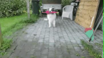 비와서 산책 못간다고!