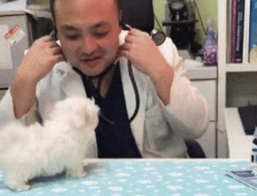 강아지 진료