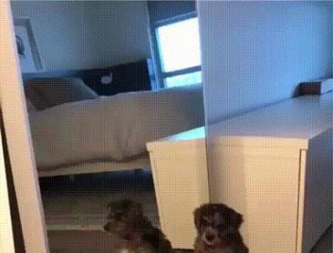 거울보고 놀란가슴