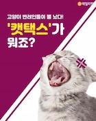 [솔로이코노미] 고양이 반려인들이 뿔 났다! '캣택스'가 뭐죠?