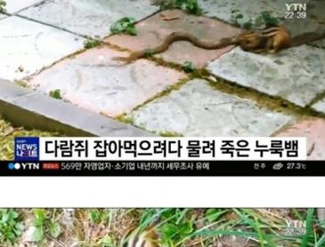 한국 다람쥐 근황