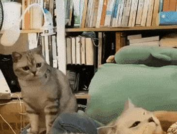 질투하는 고양이 표정