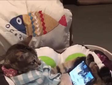 고양이를 얌전하게 만드는 방법