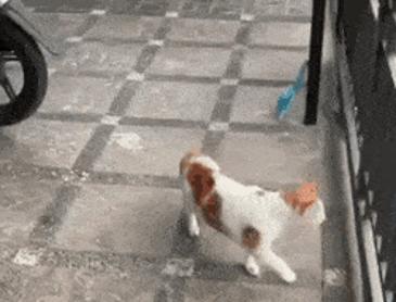 고양이는 머리만 지나가면...
