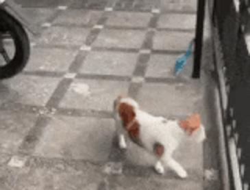 증명된 고양이 액체설