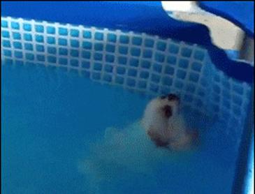 배영도 할수있어~