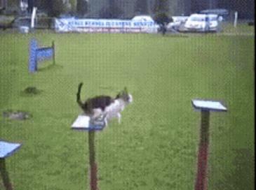 특전사 출신 고양이