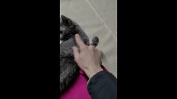 윙크하는 고양이