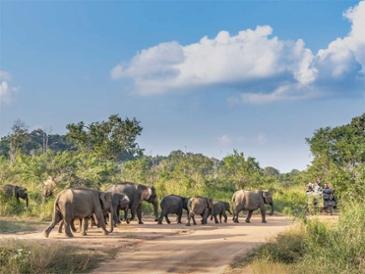 스리랑카 에코투어- 자연과 공존하는 법