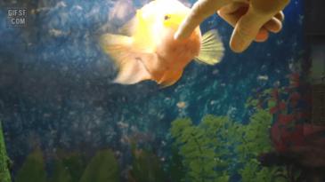 사랑스러운 물고기