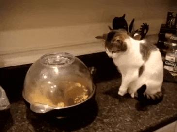 팝콘기기 처음 본 고양이