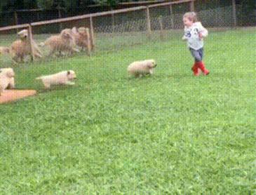맹수들의 공격