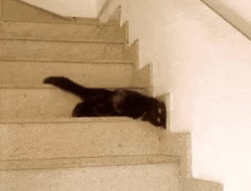 이 고양이는 왜~